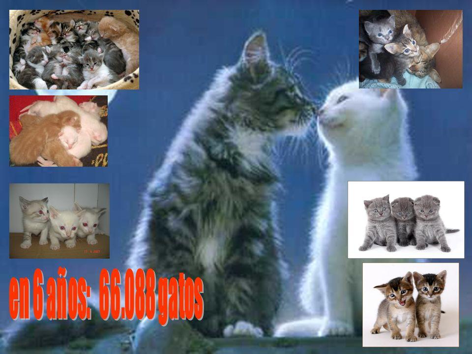 en 6 años: 66.088 gatos