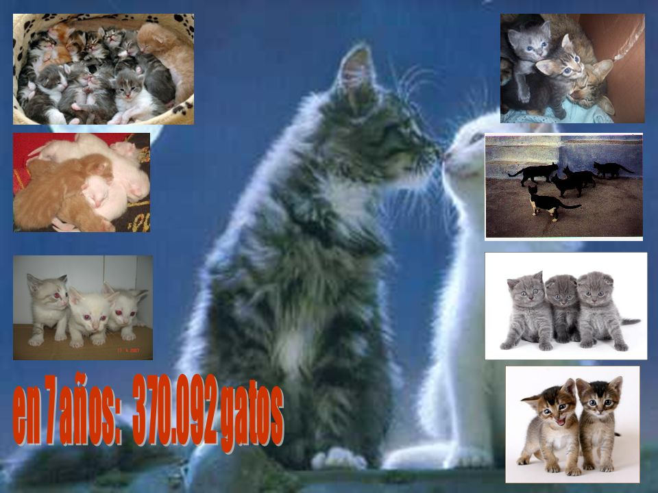 en 7 años: 370.092 gatos