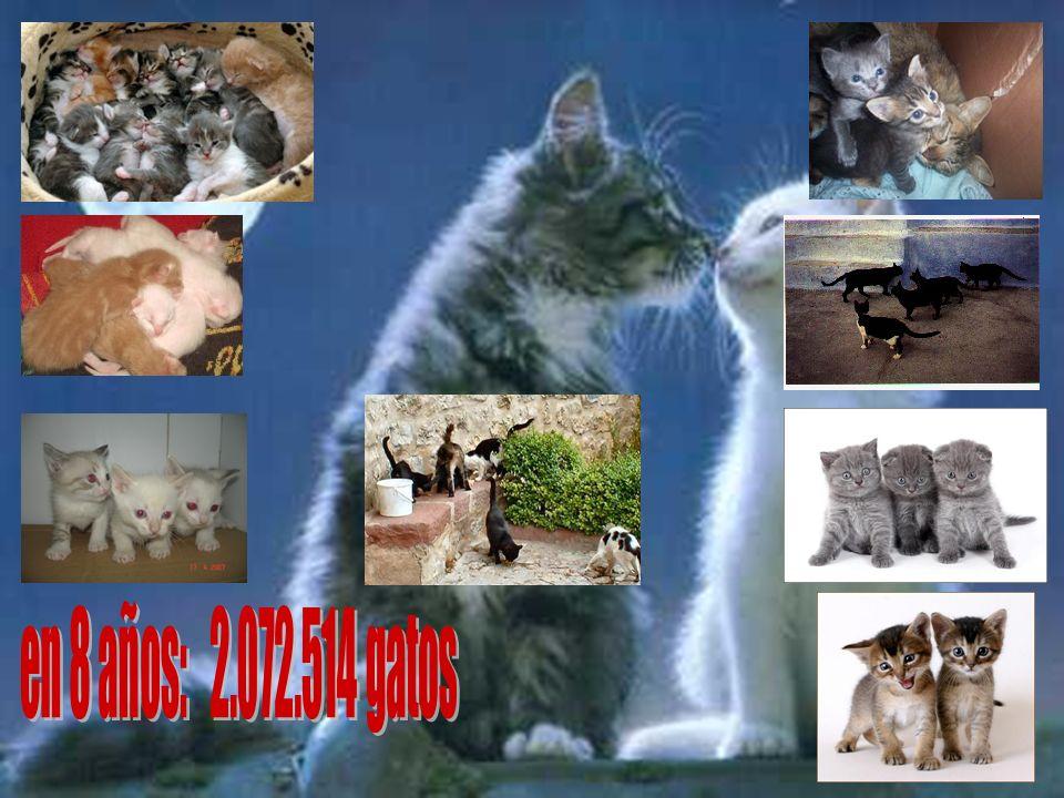 en 8 años: 2.072.514 gatos