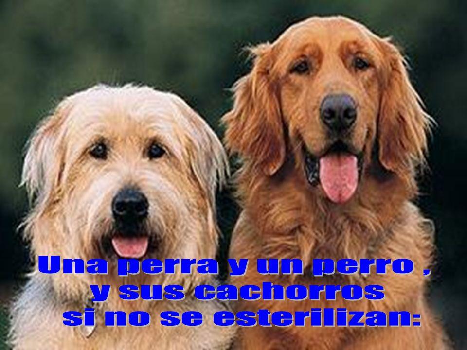 Una perra y un perro , y sus cachorros si no se esterilizan: