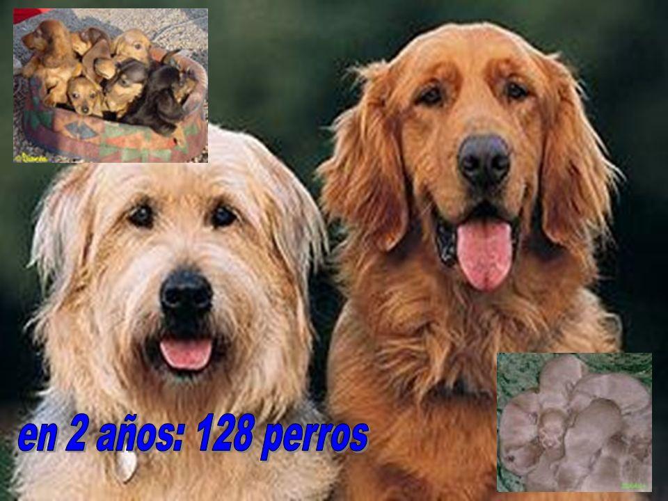 en 2 años: 128 perros