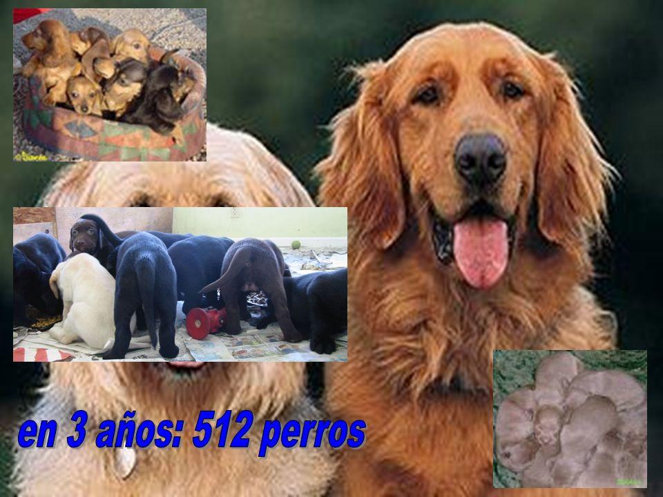en 3 años: 512 perros