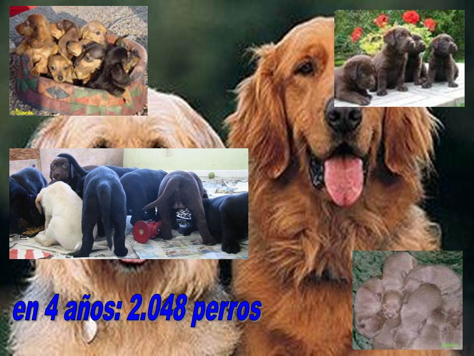 en 4 años: 2.048 perros