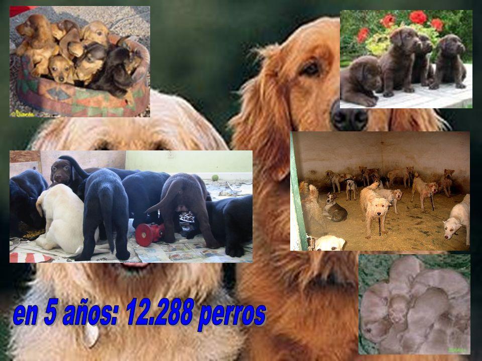 en 5 años: 12.288 perros