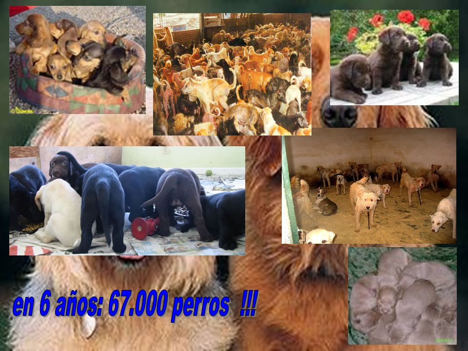 en 6 años: 67.000 perros !!!