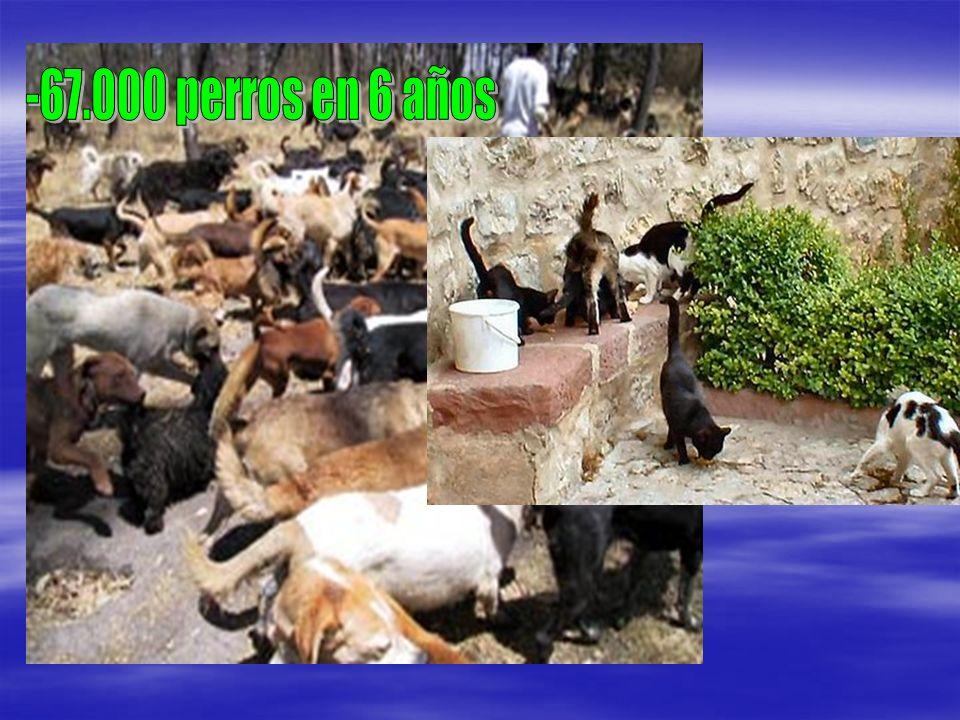 -67.000 perros en 6 años