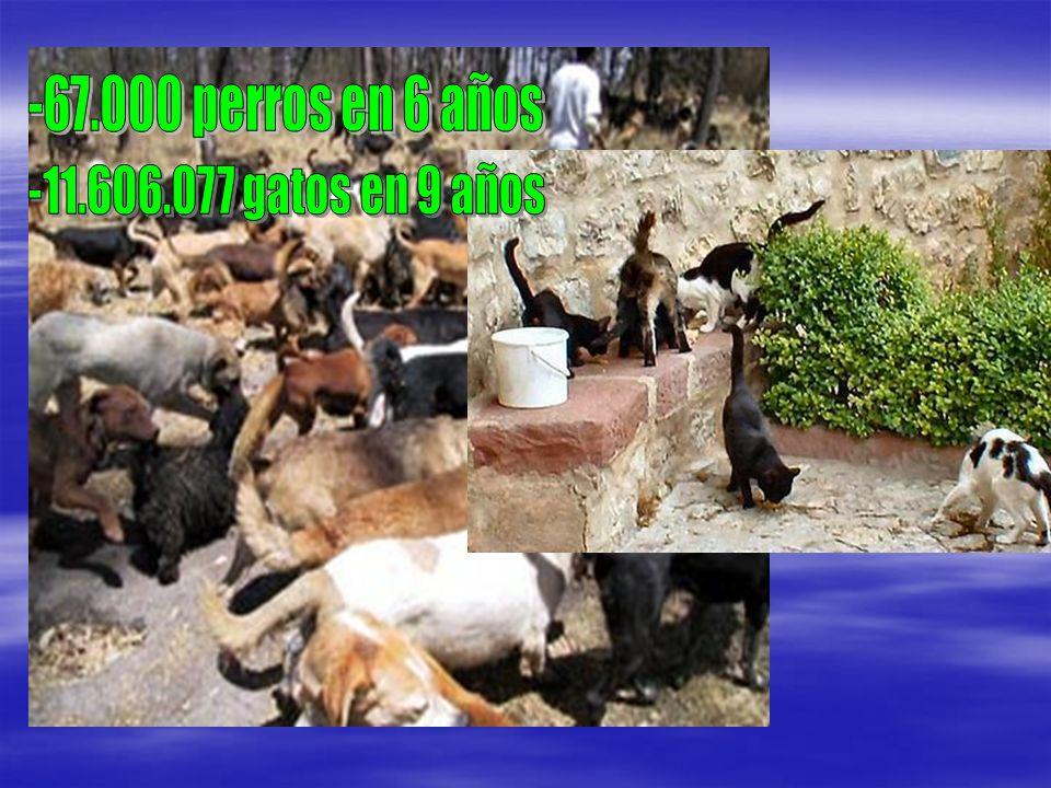 -67.000 perros en 6 años -11.606.077 gatos en 9 años