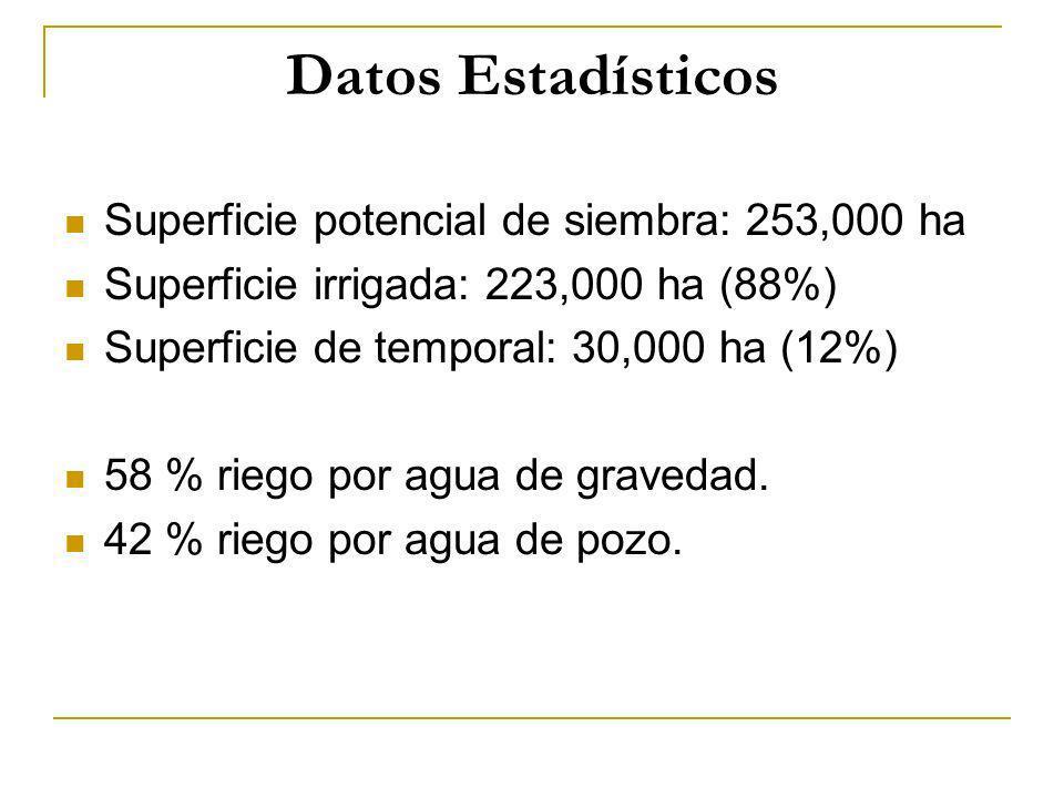 Datos Estadísticos Superficie potencial de siembra: 253,000 ha