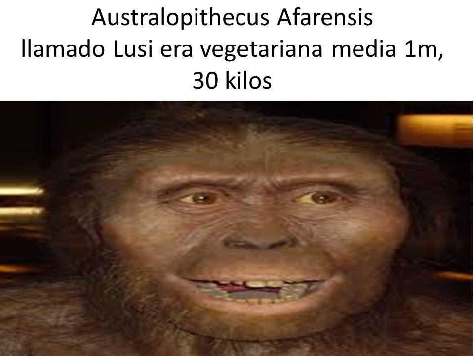 Australopithecus Afarensis llamado Lusi era vegetariana media 1m, 30 kilos