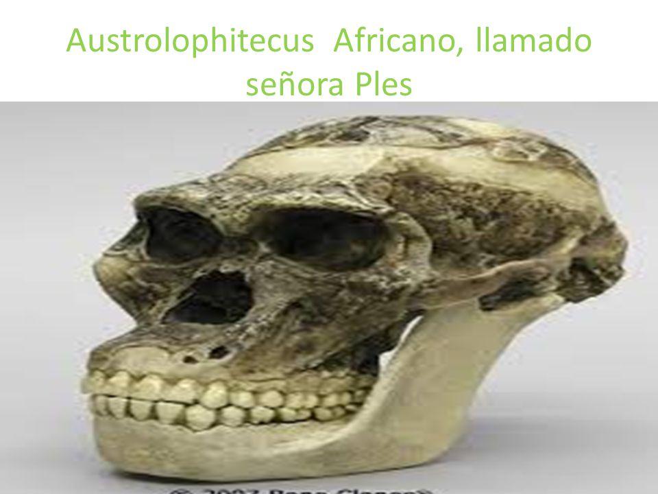 Austrolophitecus Africano, llamado señora Ples