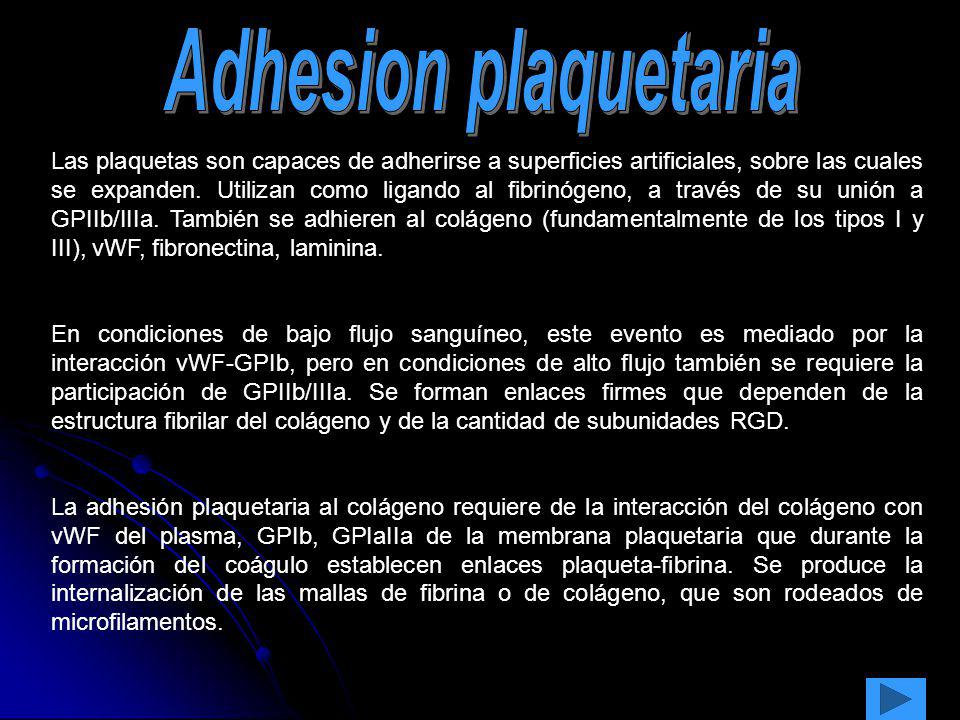 Adhesion plaquetaria