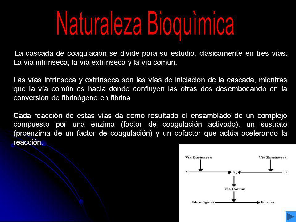 Naturaleza Bioquìmica