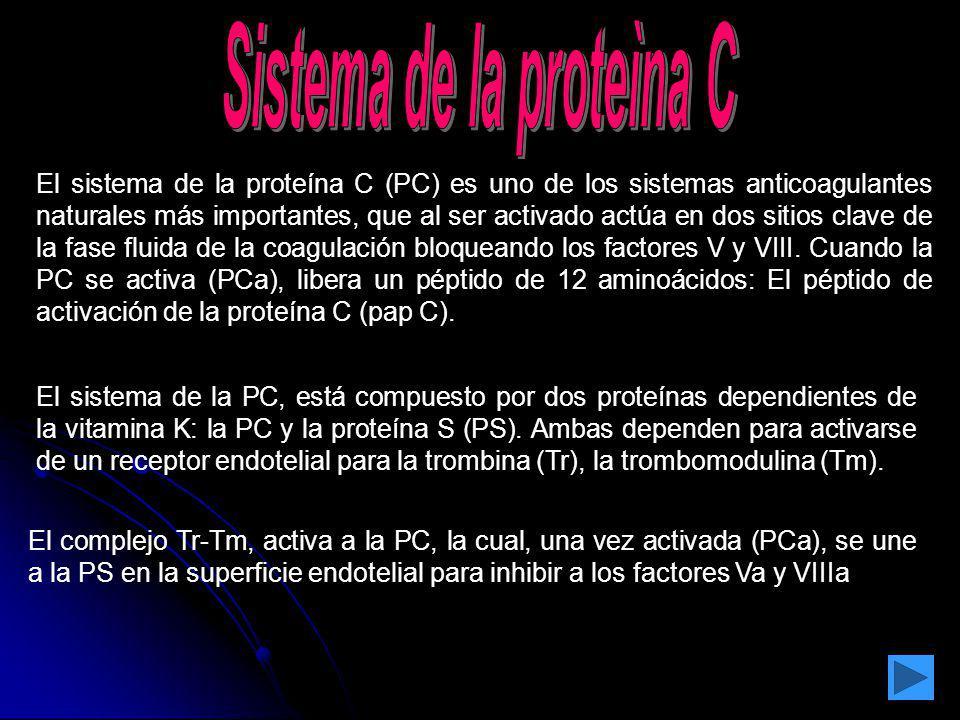 Sistema de la proteìna C