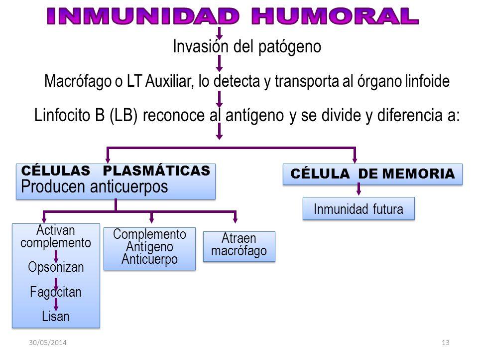 INMUNIDAD HUMORAL Invasión del patógeno