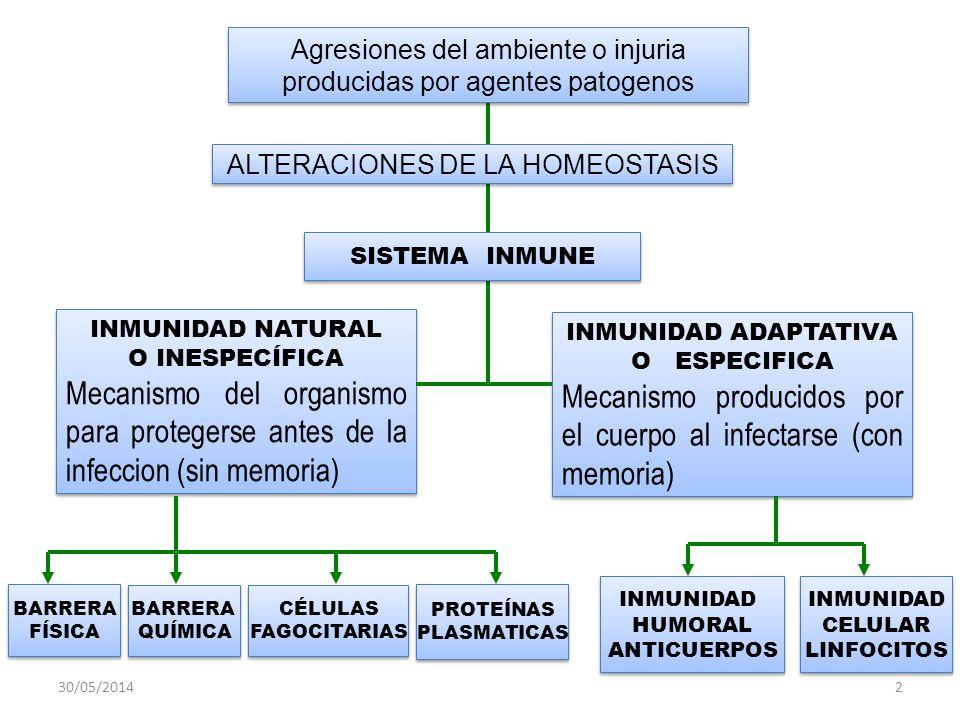 Mecanismo producidos por el cuerpo al infectarse (con memoria)