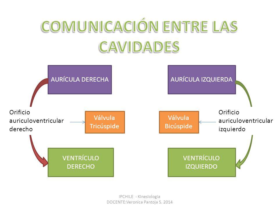 Comunicación entre las cavidades