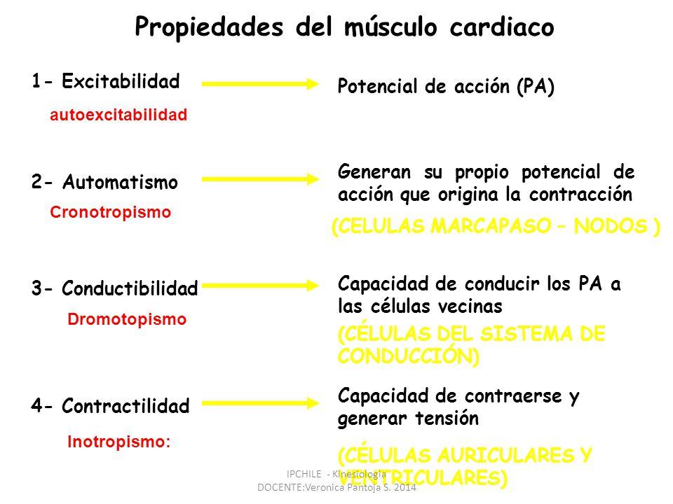 Propiedades del músculo cardiaco