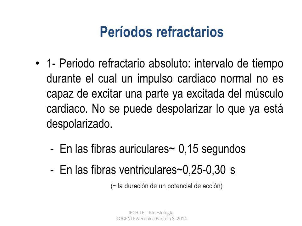 Períodos refractarios