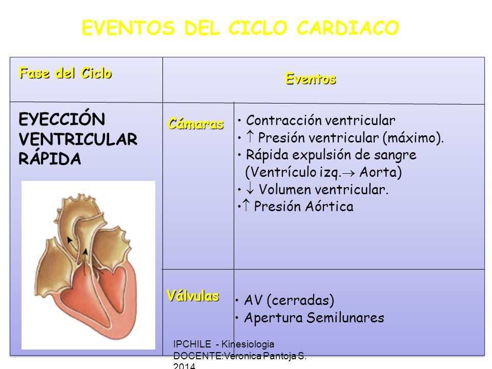 EVENTOS DEL CICLO CARDIACO
