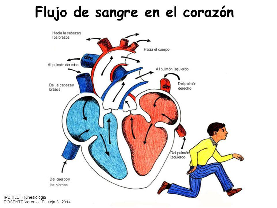 Flujo de sangre en el corazón