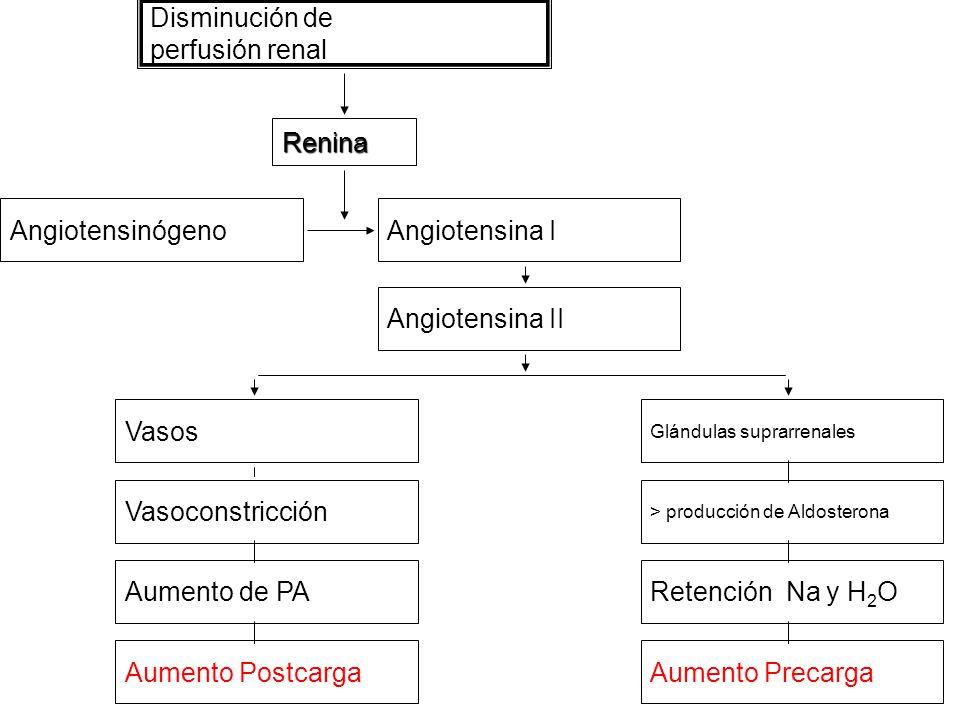 Disminución de perfusión renal Renina Angiotensinógeno Angiotensina I