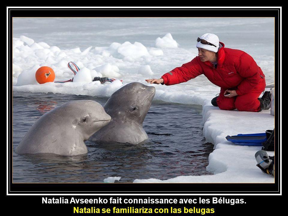 Natalia Avseenko fait connaissance avec les Bélugas.