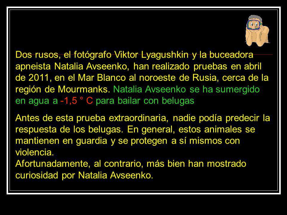 Dos rusos, el fotógrafo Viktor Lyagushkin y la buceadora apneista Natalia Avseenko, han realizado pruebas en abril de 2011, en el Mar Blanco al noroeste de Rusia, cerca de la región de Mourmanks. Natalia Avseenko se ha sumergido en agua a -1,5 ° C para bailar con belugas