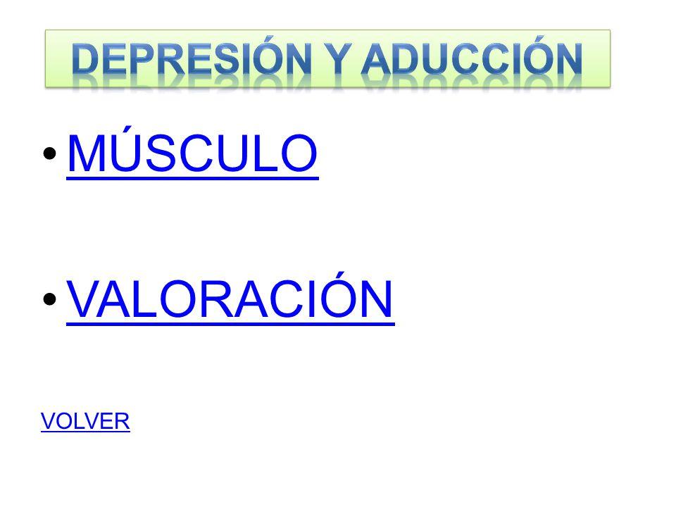 DEPRESIÓN Y ADUCCIÓN MÚSCULO VALORACIÓN VOLVER