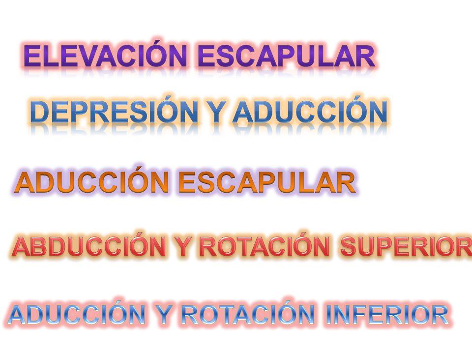 ABDUCCIÓN Y ROTACIÓN SUPERIOR ADUCCIÓN Y ROTACIÓN INFERIOR