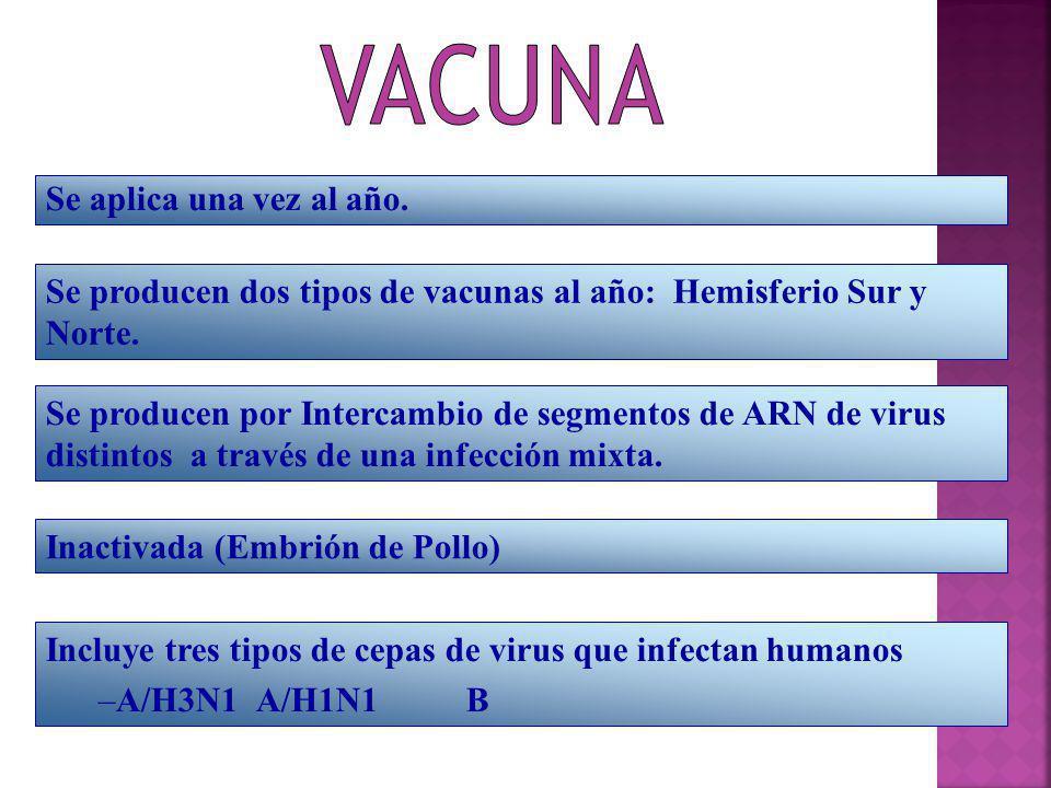 Se producen dos tipos de vacunas al año: Hemisferio Sur y Norte.