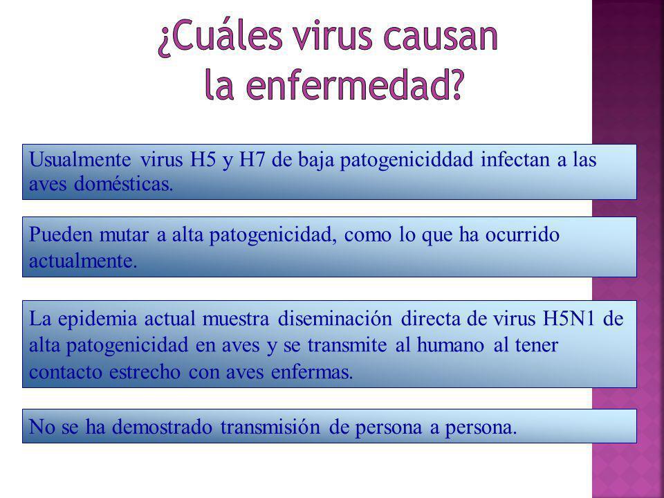 ¿Cuáles virus causan la enfermedad