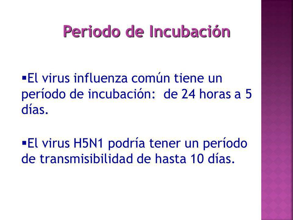 Periodo de Incubación El virus influenza común tiene un período de incubación: de 24 horas a 5 días.