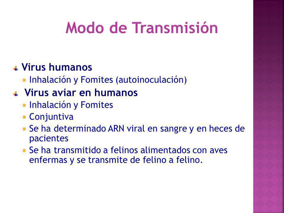 Modo de Transmisión Virus humanos Virus aviar en humanos