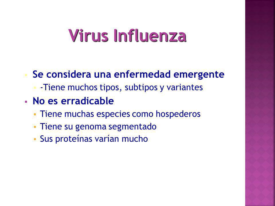 Virus Influenza Se considera una enfermedad emergente