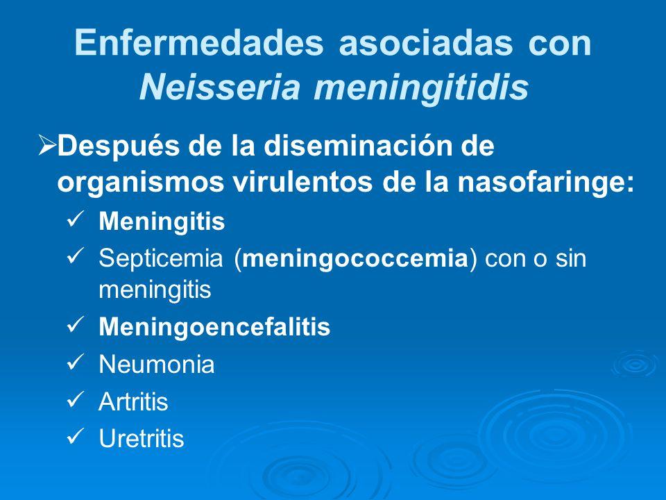Enfermedades asociadas con Neisseria meningitidis