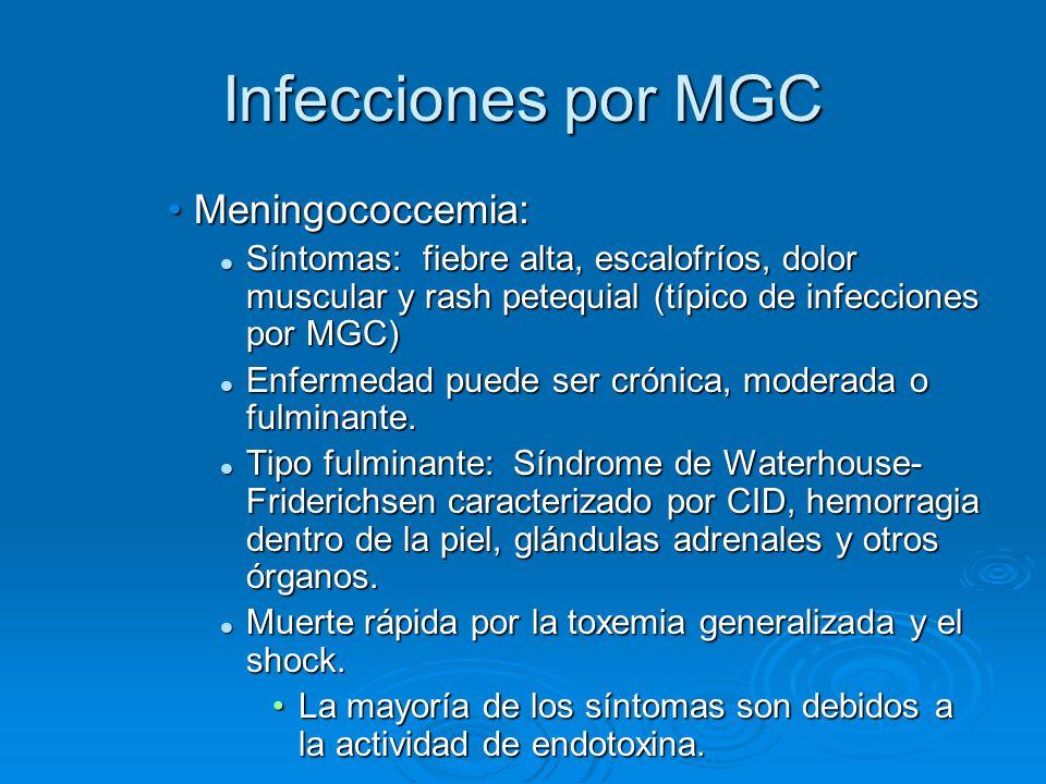 Infecciones por MGC Meningococcemia: