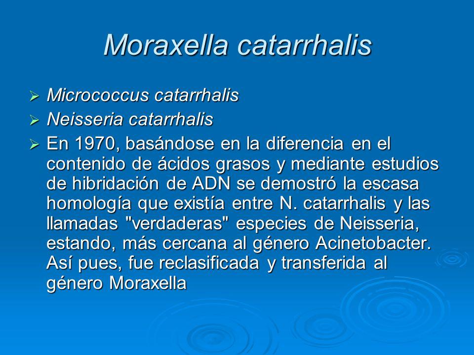 Moraxella catarrhalis