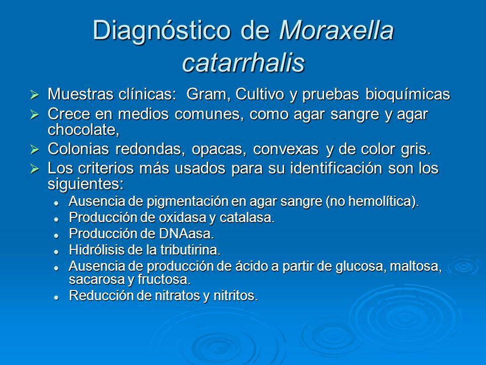 Diagnóstico de Moraxella catarrhalis