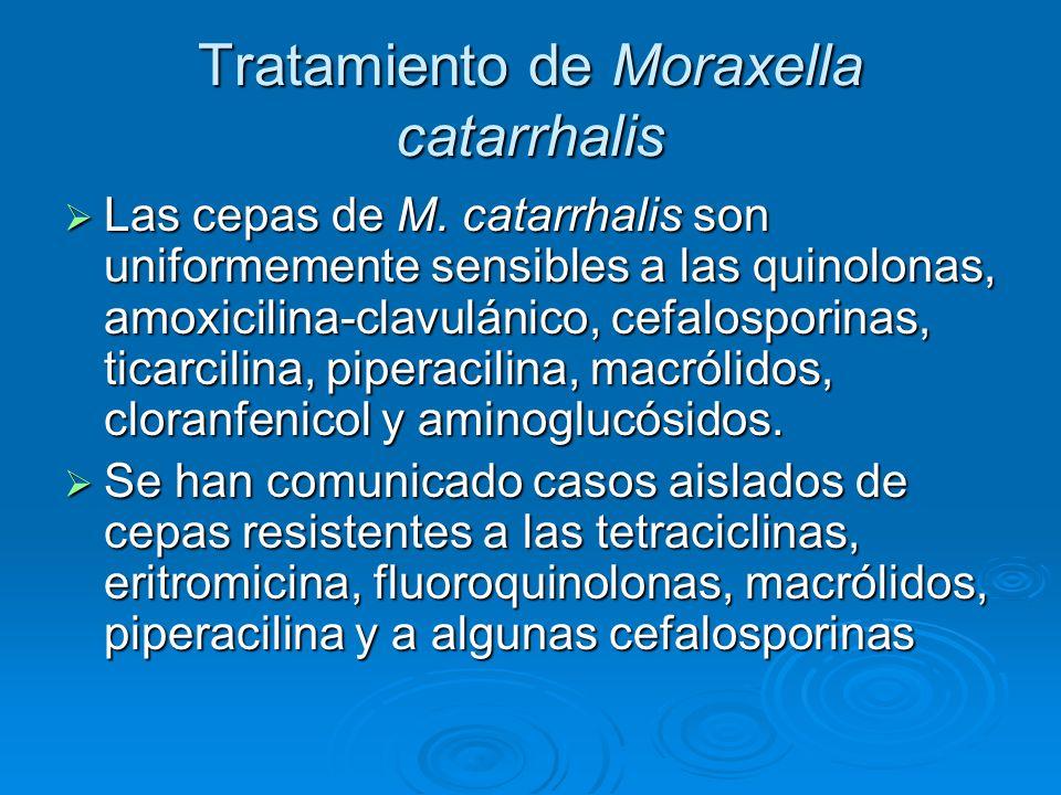 Tratamiento de Moraxella catarrhalis