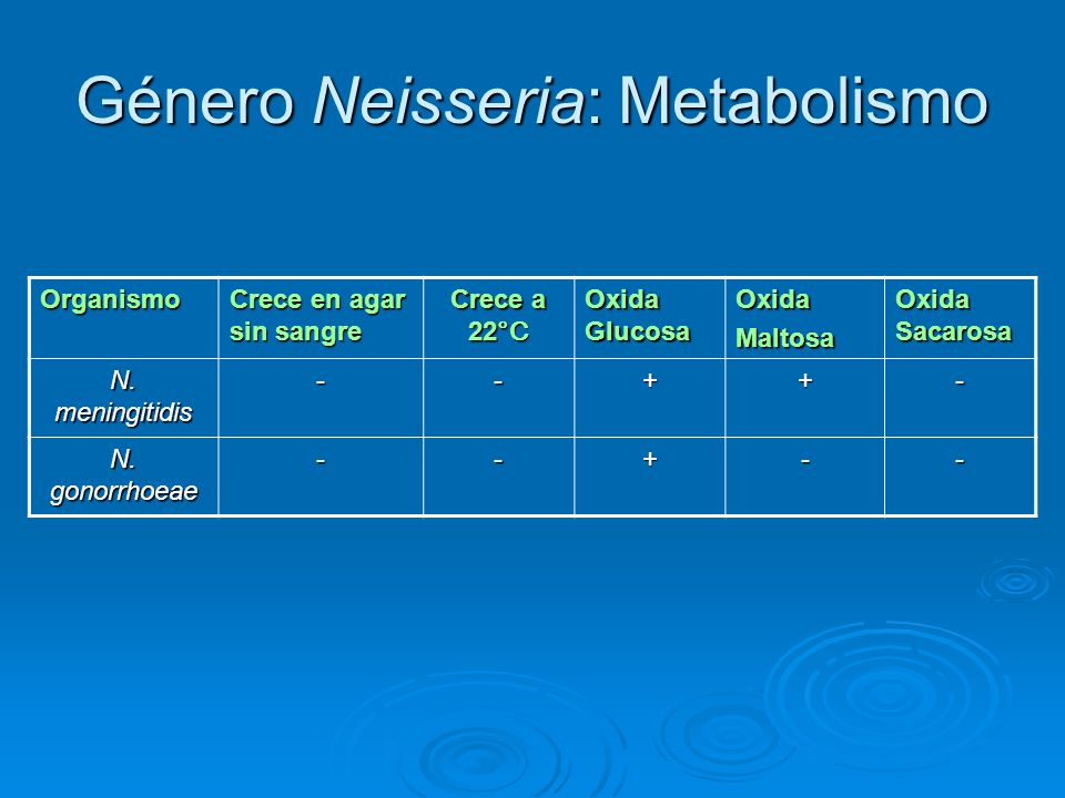Género Neisseria: Metabolismo