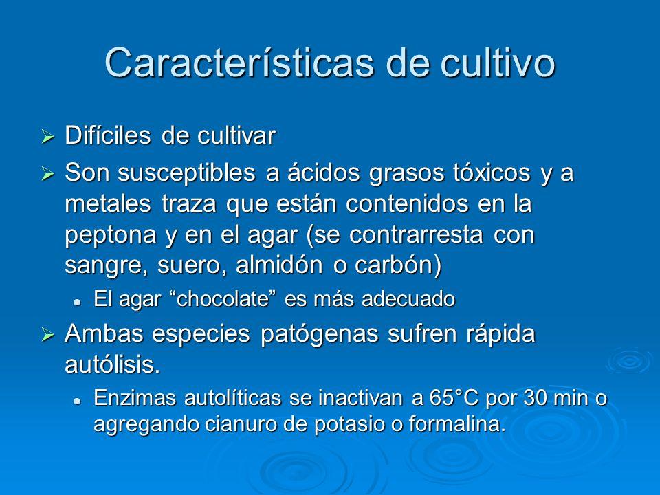 Características de cultivo