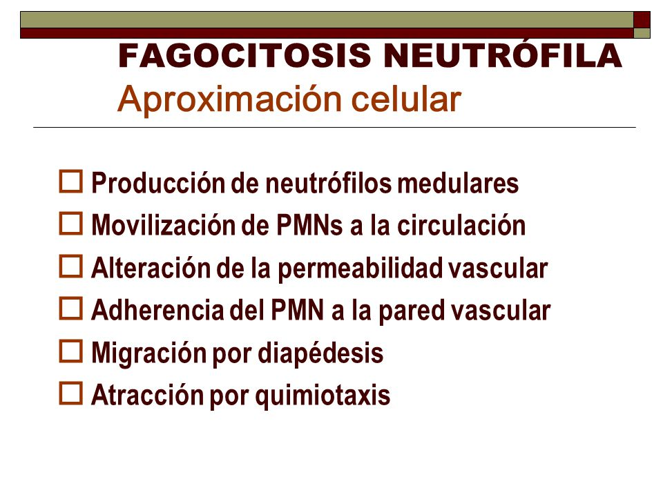 FAGOCITOSIS NEUTRÓFILA Aproximación celular