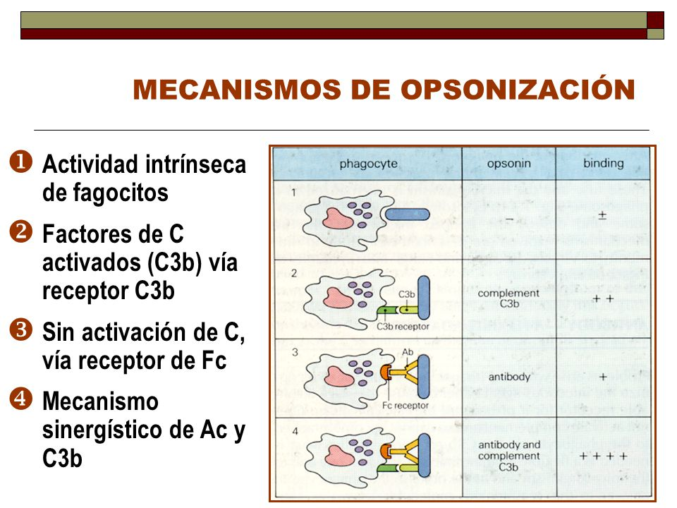 MECANISMOS DE OPSONIZACIÓN