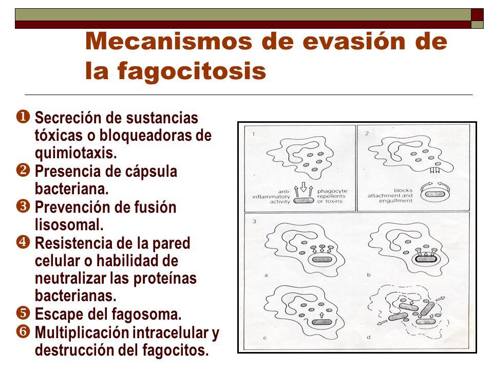 Mecanismos de evasión de la fagocitosis