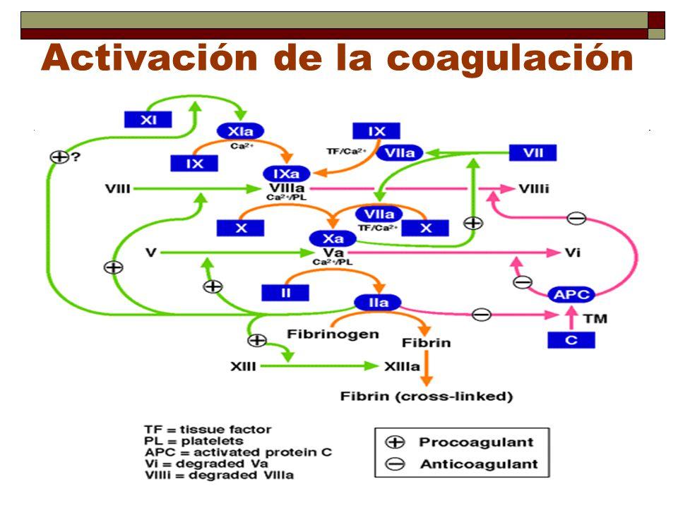 Activación de la coagulación