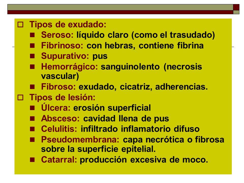Tipos de exudado: Seroso: líquido claro (como el trasudado) Fibrinoso: con hebras, contiene fibrina.