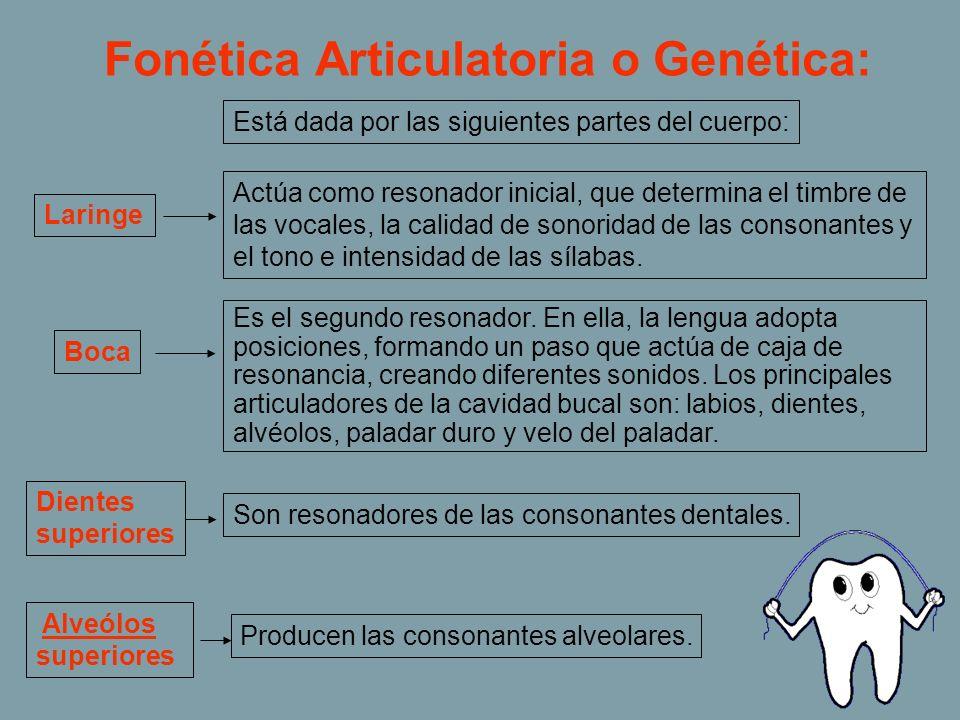 Fonética Articulatoria o Genética: