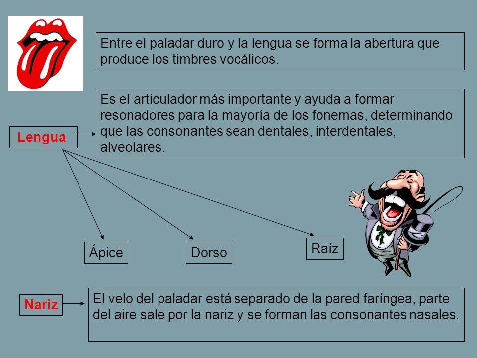 Entre el paladar duro y la lengua se forma la abertura que produce los timbres vocálicos.