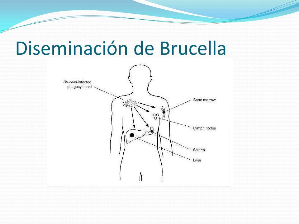 Diseminación de Brucella