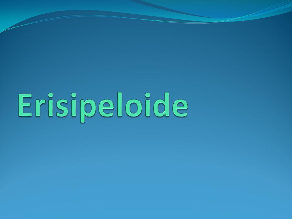 Erisipeloide